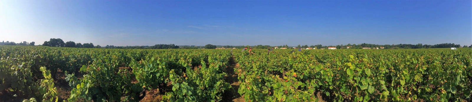 Vineyard Domaine Michel Bregeon